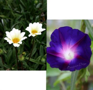 flower04.jpg