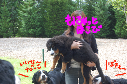 koima-nomonyato.jpg