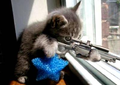 猫スナイパー