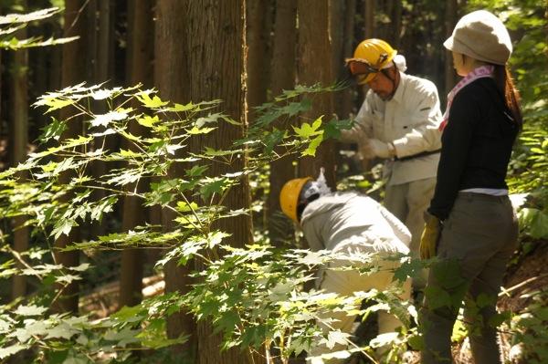 林業ガール間伐