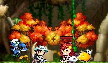 Maple0029_20080926150951.jpg