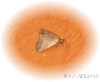 bCIMG5946.jpg