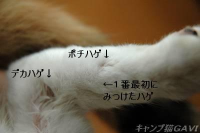 bDSC_7569.jpg