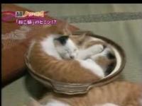ねこ鍋のヒミツ!?