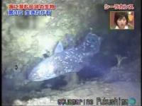 海に潜む伝説の生物ベスト3の映像