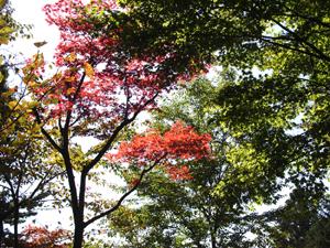 061010-takao07.jpg