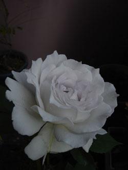 200906124.jpg