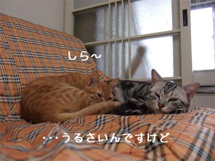 gin_kina22.jpg