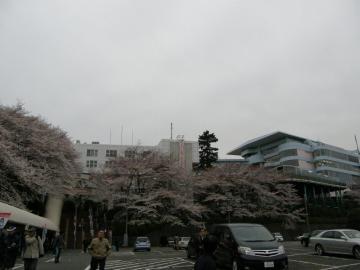 花月園競輪場の入口には満開の桜が・・・