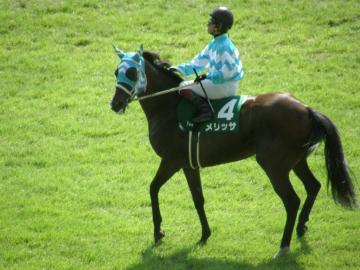 北九州記念を勝ったメリッサ。返し馬に入るところ。