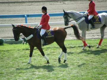 現在は小倉競馬場の誘導馬を務める「小倉三冠馬」メイショウカイドウ