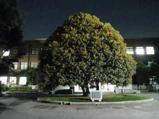 Oct08_2010