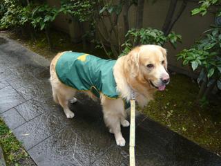 雨の日ブログ