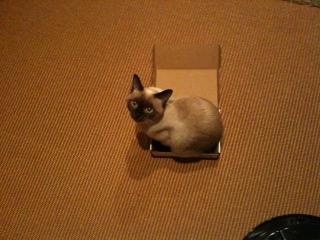 箱ねこ2-5