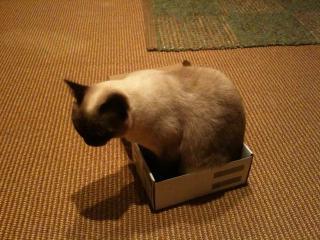 箱ねこ2-3
