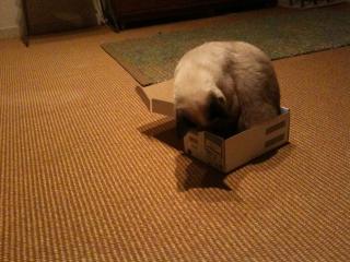 箱ねこ2-4