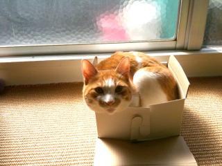 11春箱猫4