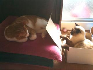 11春箱猫2