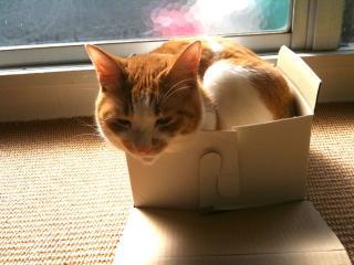 11春箱猫3