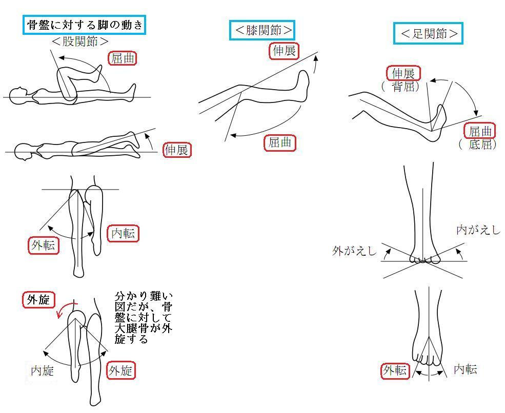関節の動き6