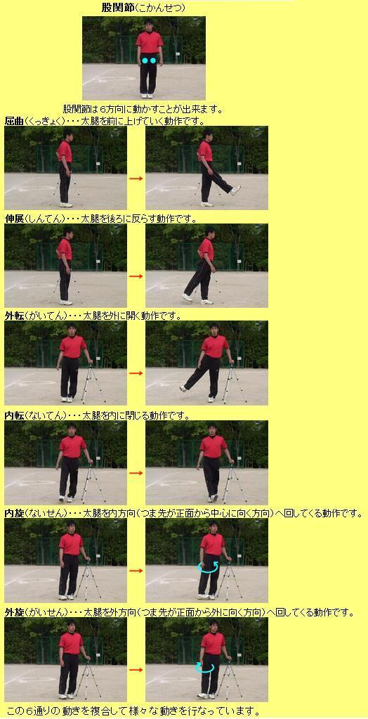 股関節の動き2