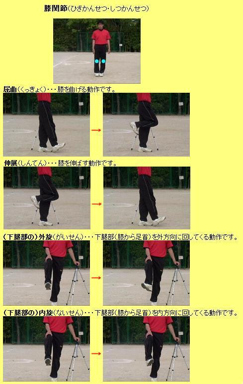 膝関節の動き 2