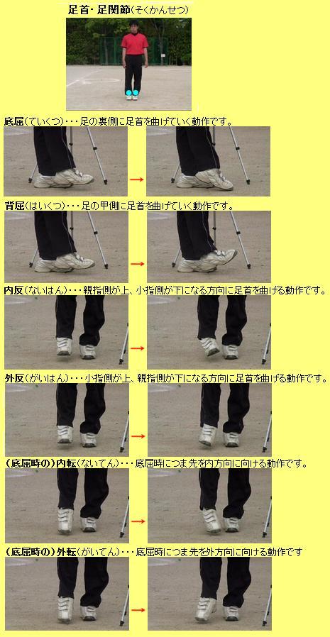 足首・足関節