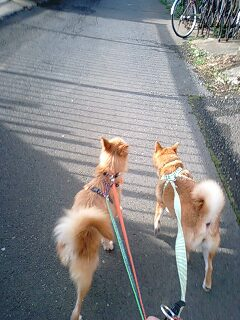 ロッコお散歩だ