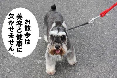 Mシュナ_GO&ダイアン散歩1