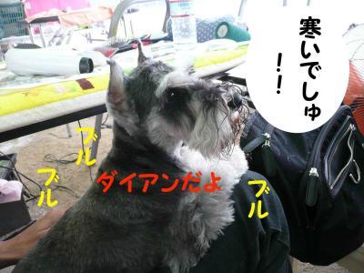 081005尾道ドッグショー4-s