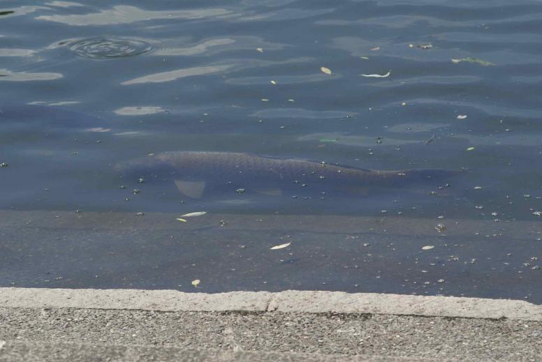 708fish