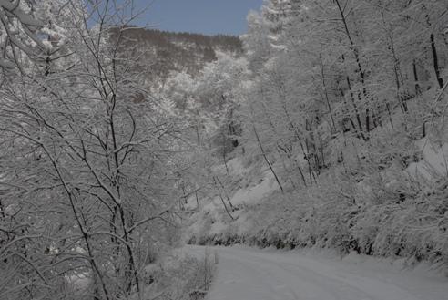冬の分杭峠 005