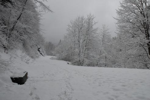 冬の分杭峠 016