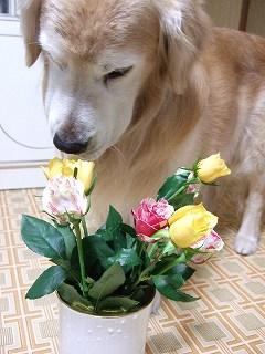 2008_0510_180140-s.jpg