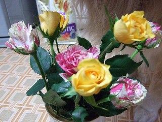 2008_0510_180235-s.jpg