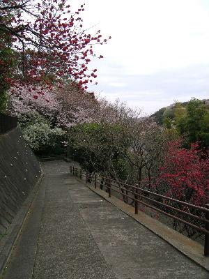 2011_0410(015).jpg