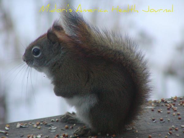 feb+15+009_convert_20110217015320.jpg