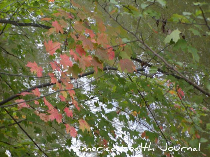川辺の紅葉 ミシガン