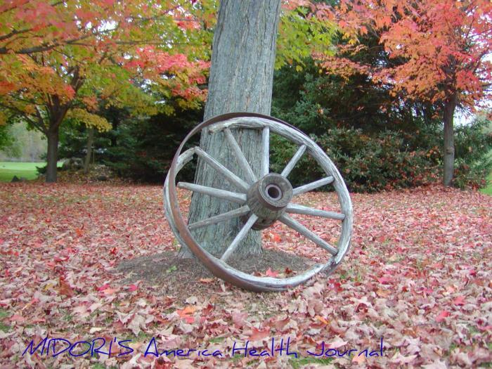 紅葉と車輪