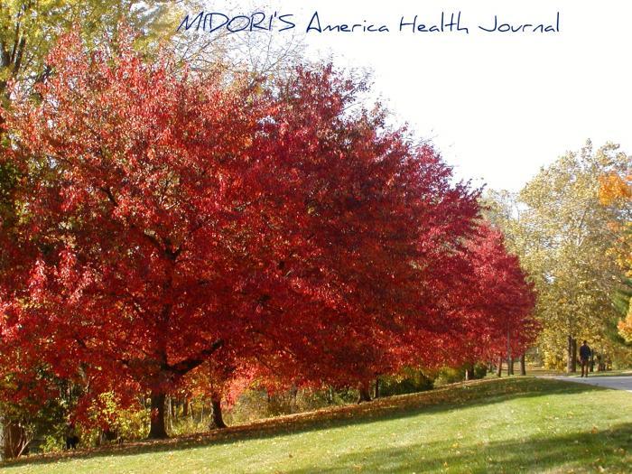 ミシガン州立大学 秋の紅葉 川辺