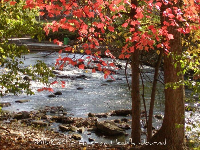 ミシガン州立大学キャンパス レッドシダー川 メープル紅葉