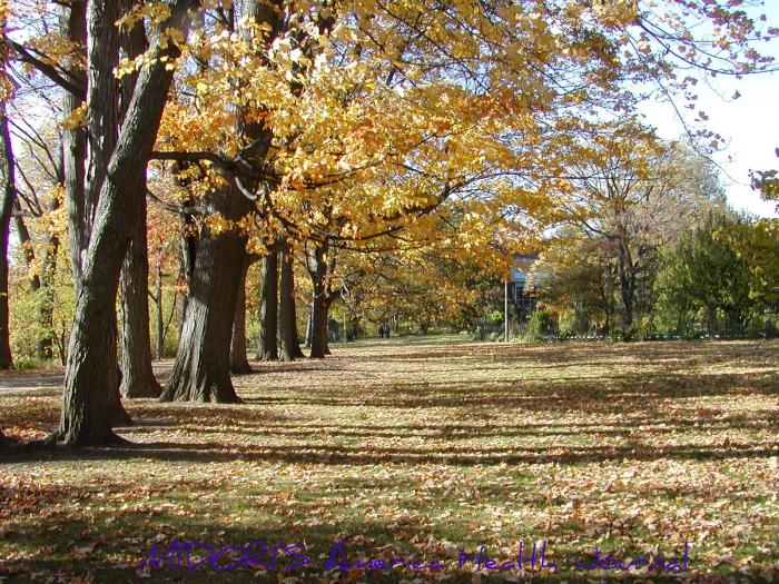 ミシガン州立大学キャンパス 黄色い紅葉 影