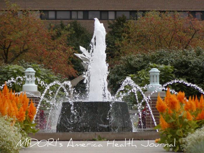 MSUガーデン 噴水 秋の日