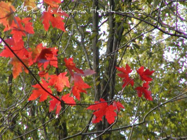木漏れ日 紅葉