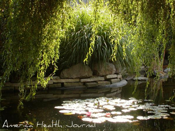 月の灯りとスイレンの池