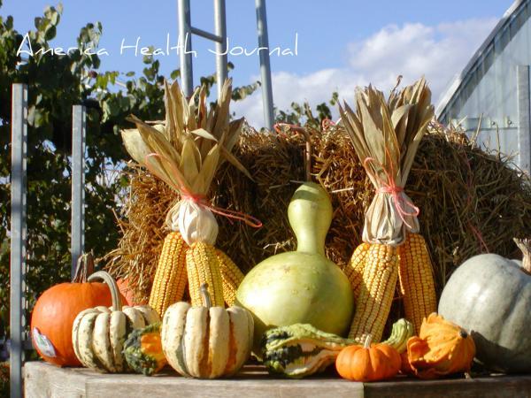 秋の店頭ディスプレー用のかぼちゃとコーン各種