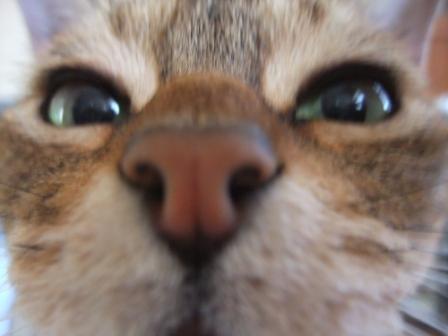 トトラの鼻デカ