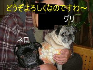 2005_1016ichiba0003c.jpg
