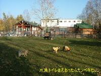 2005_1106wel0020.jpg