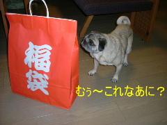 2005_1219fuku0011b.jpg